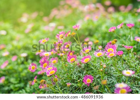 photo of a beautiful  flora. flower landscape in sunny day