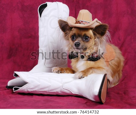 Photo of a Chihuahua dog with cowboy hat & boots - stock photo
