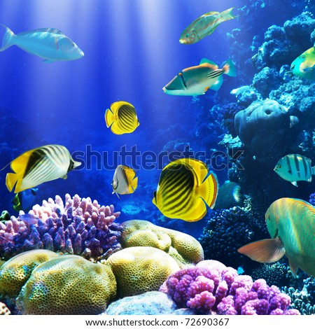 Photo of a coral colony on a reef, Egypt - stock photo