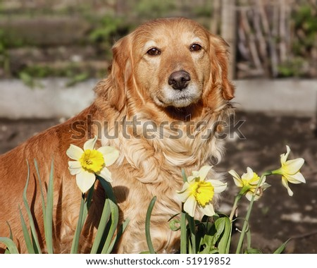 Photo of a dog on a background of beautiful spring flowers - stock photo