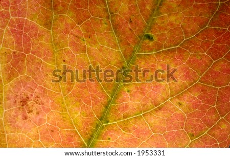 Photo of a Leaf Structure - Autumn Background