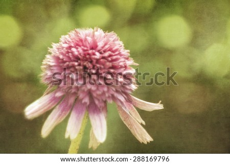 Photo of a  pink flower with artistic texturing applied to the background. - stock photo