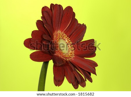 Photo of a Red Flower on a Green Background
