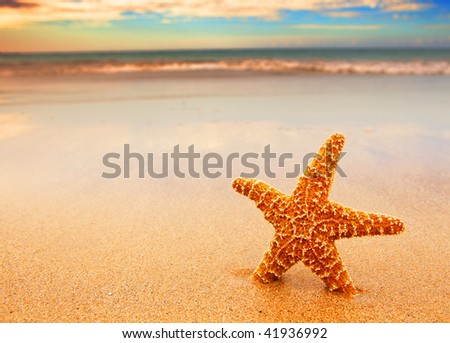 photo of a starfish on the sand - stock photo