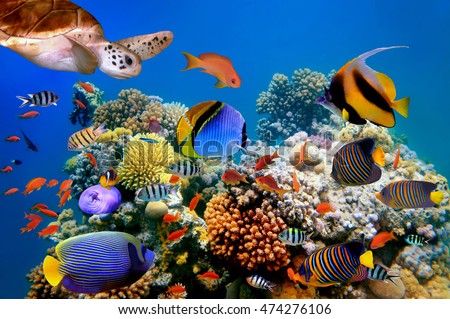 Photo of a tropical fish and turtle on a coral reef. Redd Sea.