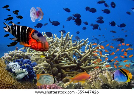 Photo of a tropical Fish on a coral reef. Red Sea