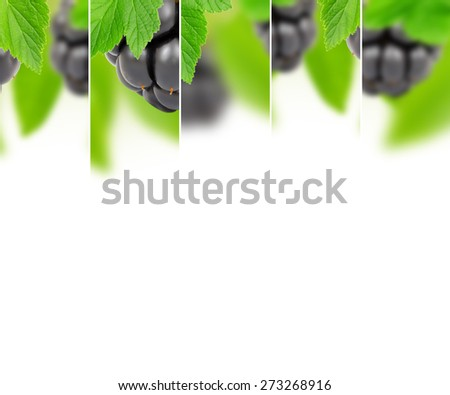 Photo of abstract blackberry mix with white space for text - stock photo