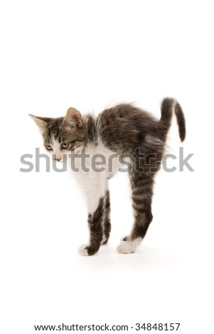 Photo of an adorable kitten isolated on white - stock photo