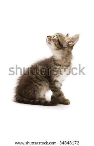 Photo of an adorable kitten isolated on white