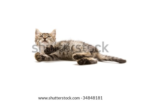 Photo of an adorable kitten lying on a white background