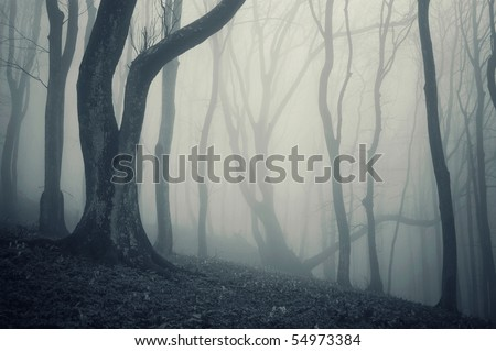 photo of an old tree in a cold forest with fog - stock photo