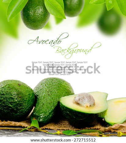 Photo of avocado with leaves and slice with white space for text - stock photo