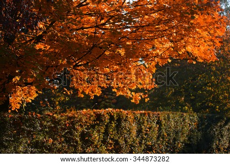 Photo of beautiful autumn park with picturesque broad-crowned golden-leaved trees and verdant hedge on bright fall orange heavy foliage background, horizontal picture - stock photo