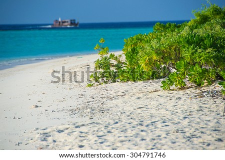 photo of beautiful tropical beach with white sand and bushes - stock photo