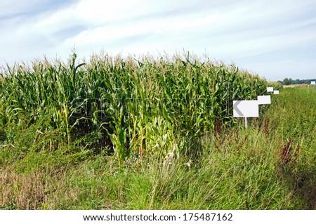 Photo of big corn field - stock photo