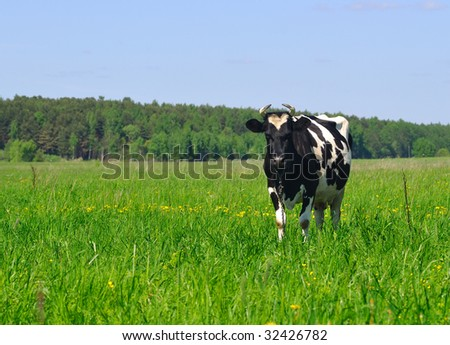 Photo of black and white cow standing in the field on a sunny summer day - stock photo