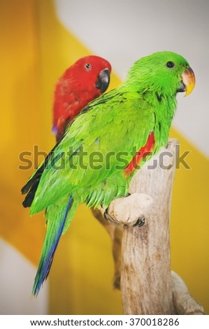 Photo of Bright Parrot  - stock photo