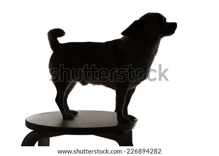 Photo of chihuahua's silhouette in profile on white background - stock photo