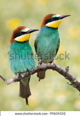 Photo of couple of birds a over spring background - stock photo