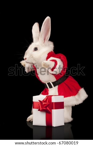 Photo of cute rabbit in a santa costume with gift box. Isolated on dark background - stock photo