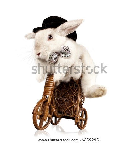 Photo of cute rabbit  with top hat and bow riding bike. Isolated on dark background - stock photo