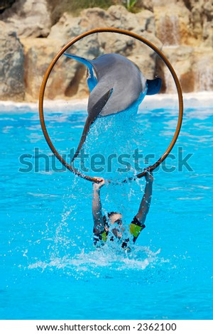 photo of dolphin doing a show in the swimming pool - stock photo