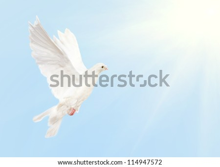 photo of dove flying in blue sky with sun - stock photo