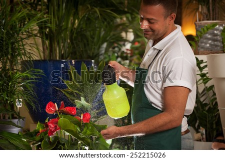 Photo of florist cleaning his plants in shop - stock photo