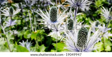 Photo of flowers in a Copenhagen Park. - stock photo