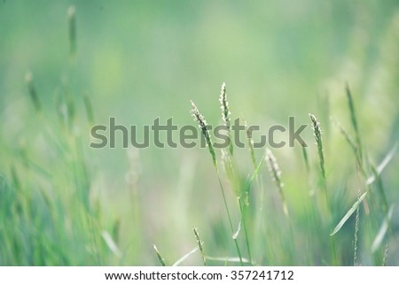Photo of fresh green grass at spring - stock photo