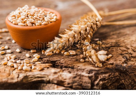 Photo of fresh wheat grains  - stock photo