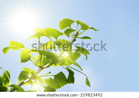 Photo of Ginkgo Biloba Tree Leaves Over Blue Sky, Copyspace  - stock photo