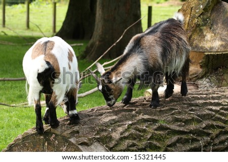photo of goats on a fallen tree