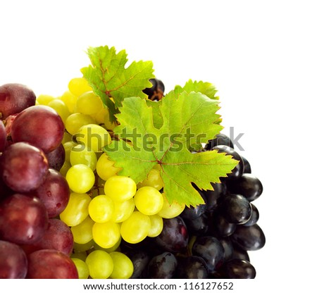 Photo of grapes variety, different kind of vine, colors grape border, three bunch of grapes isolated on white background, tasty blue juicy fruits, sweet fresh red berry with green leaves - stock photo