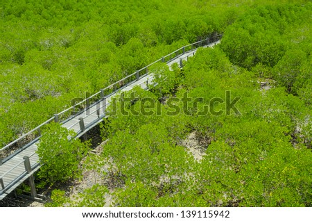Photo of green fertile mangrove forests of Thailand.