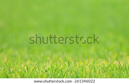 Photo of lawn with blurred background, shallow depth of field - stock photo