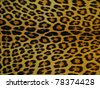 photo of leopard skin - stock photo