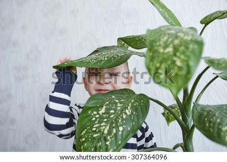 photo of little boy and flower at home - stock photo