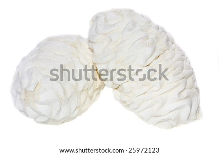 Photo of marsh-mallow isolated on white background
