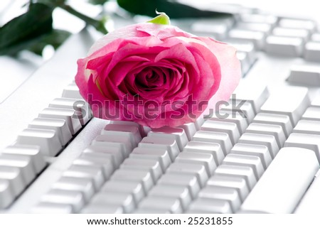 Photo of pink rose bud lying on white computer board - stock photo