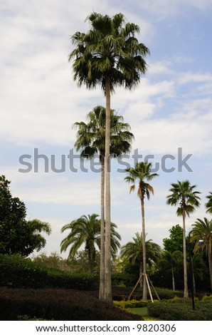 Photo of Plam Trees - Tropical Landscape