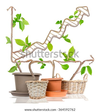Photo of plants growing from pots forming arrow isolated on white - stock photo