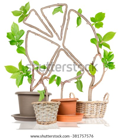 Photo of plants growing from pots forming graph isolated on white - stock photo