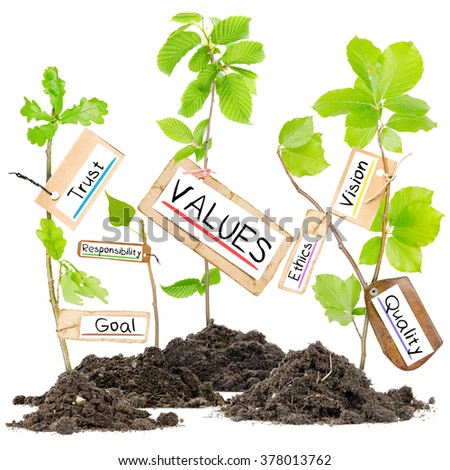 Photo of plants growing from soil heaps with OVERCOMING conceptual words written on paper cards - stock photo
