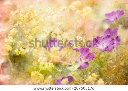 Photo of purple flowers in a summer garden with artistic texturing applied. - stock photo