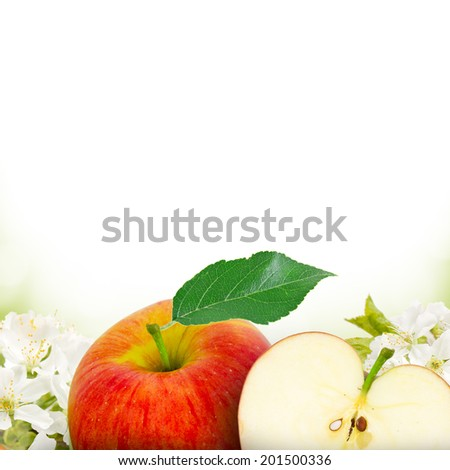 Photo of red apples with apple blossom background - stock photo