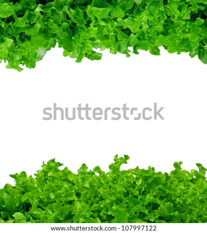 Photo of salad isolated on white, abstract background - stock photo