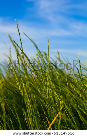 photo of sky and grass