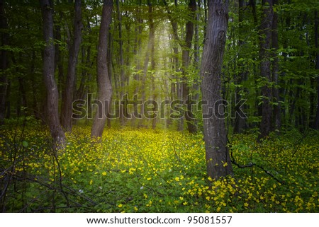 Photo of spring wood with mystic light