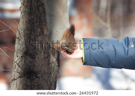 photo of squirrel eating from child hand